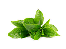 Green tea leaf for alertness