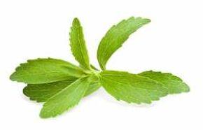 Stevia leaf in SkinnyFit detox tea