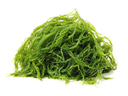 Kelp powder benefits
